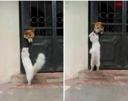 social-distancing-dog