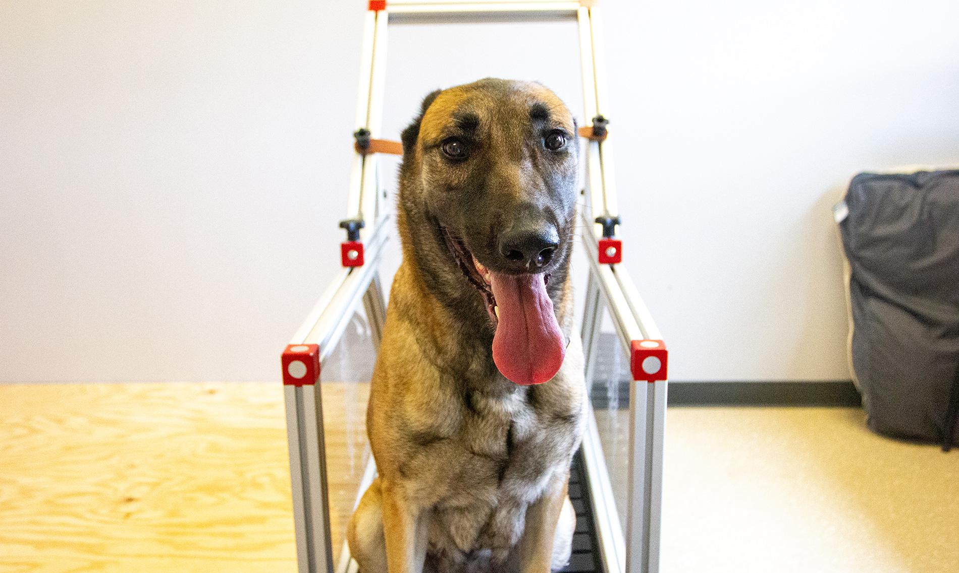 training-dog
