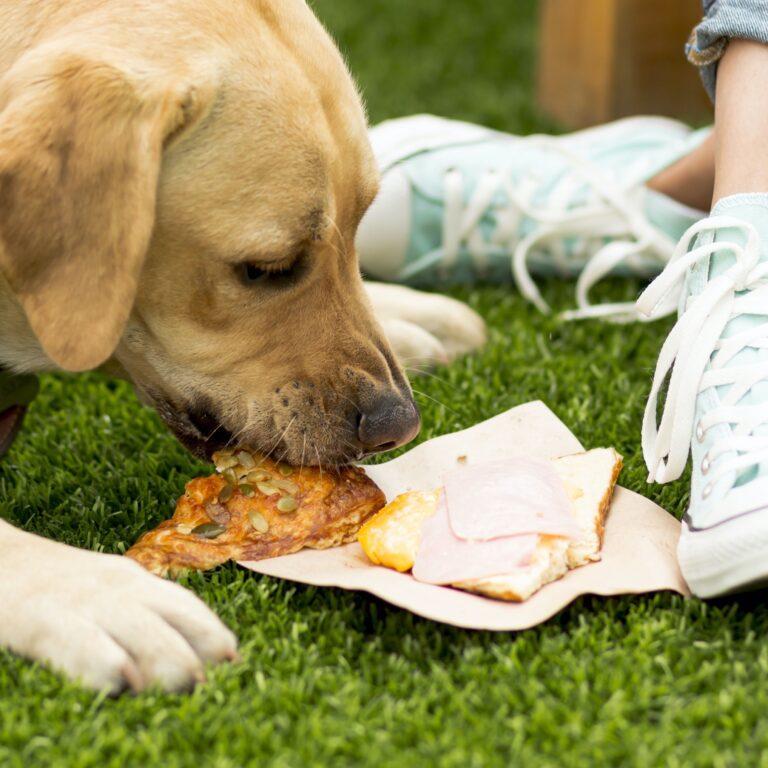 Dog eating human food on grass